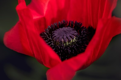 The Poppy Project is still going!