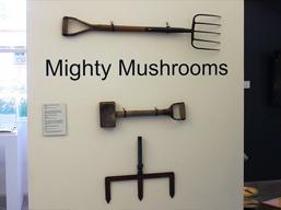 The Mighty Mushroom: Fifty Years of Mushroom Farming in the Hawkesbury